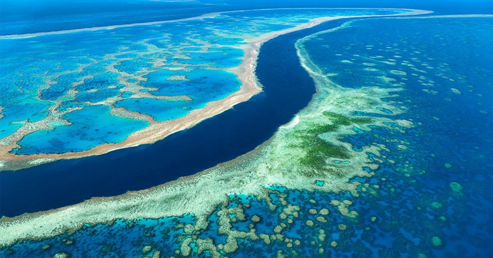 سد مرجانی