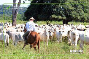 کشاورزی و دامپروری در نیوزلند